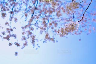 風景 - No.1095531