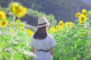 ひまわり畑の少女の写真・画像素材[3520345]