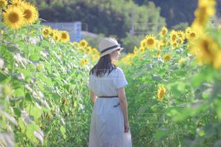 ひまわり畑と少女の写真・画像素材[3520368]