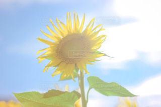 花のクローズアップの写真・画像素材[3520384]