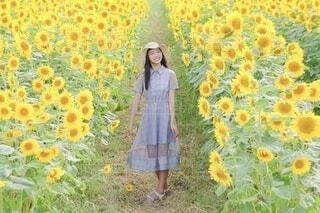 ひまわりと少女の写真・画像素材[4693536]