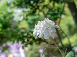公園,緑,紫陽花,梅雨
