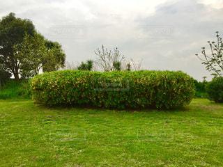 背景の木と大規模なグリーン フィールドの写真・画像素材[1181937]