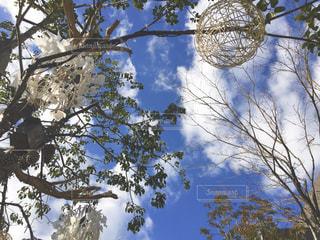 フォレスト内のツリーの写真・画像素材[1100424]