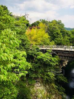 森の中の川に架かる橋を渡る列車の写真・画像素材[1164413]