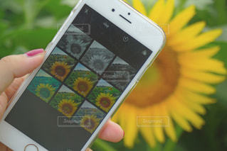 携帯電話を持つ手の写真・画像素材[2310974]