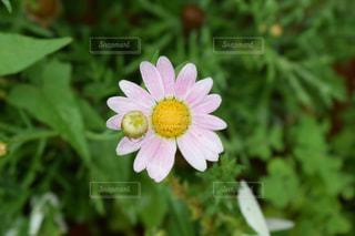 近くの花のアップの写真・画像素材[1181723]