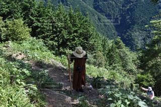 森の人々 のグループの写真・画像素材[1415381]