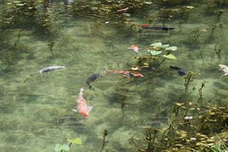 水の上を飛んでいる鳥の写真・画像素材[1415383]