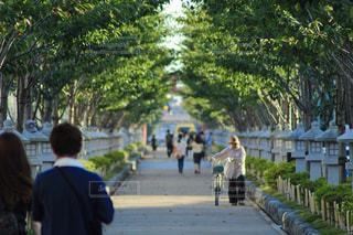 ながーい道の写真・画像素材[2260071]