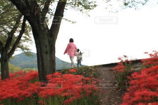 親子で花畑へ - No.1170692