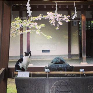 神社に猫 - No.1195005