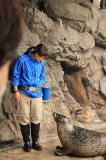 岩の上のシールの前に立っている人 - No.1198256