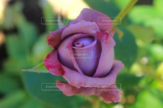 近くの花のアップの写真・画像素材[1201655]