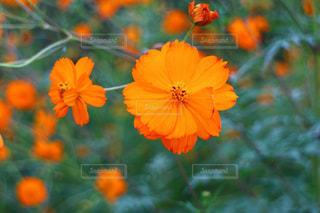 近くの花のアップ - No.1201695
