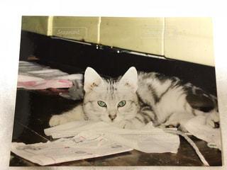 白い面の上に横たわる猫の写真・画像素材[1257268]