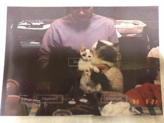 ベッドの上に座っている猫の写真・画像素材[1257272]
