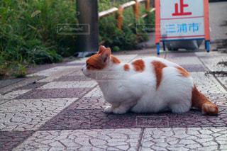 歩道の上に座ってオレンジと白猫の写真・画像素材[1257289]