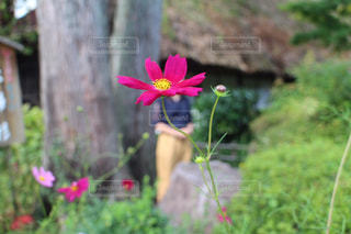 植物にピンクの花の写真・画像素材[1262478]