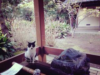 テーブルの上に座って猫の写真・画像素材[1272666]