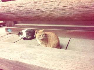 木製テーブルの上に横になっている猫の写真・画像素材[1272668]