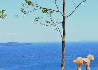 水の体の横にあるツリーの写真・画像素材[1312675]