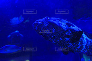 魚の写真・画像素材[1312720]