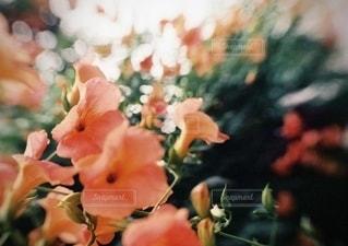 花のクローズアップの写真・画像素材[3458894]