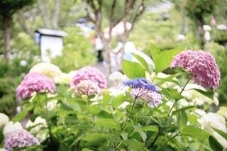 花園のクローズアップの写真・画像素材[3459109]