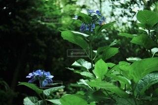 花園のクローズアップの写真・画像素材[3459133]