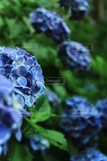 植物のクローズアップの写真・画像素材[3459134]