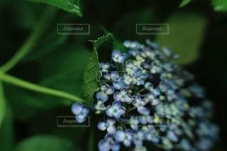 植物のクローズアップの写真・画像素材[3459149]