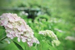 花のクローズアップの写真・画像素材[3459150]