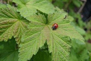 近くの緑の植物をの写真・画像素材[1072968]