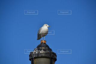 青空と鳥の写真・画像素材[1096833]