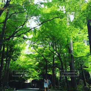 自然,カップル,木,緑,大自然,グリーン,森林浴,真夏,草木,もり,日本の森林