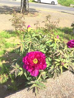 植物にピンクの花の写真・画像素材[1125533]