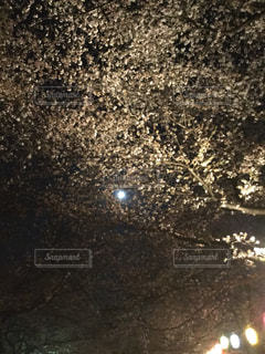 桜,夜,提灯,月,ex.埼玉県公園