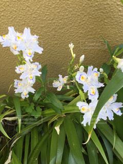 花,紫,黄色,薄紫,多色,ex.埼玉県道端