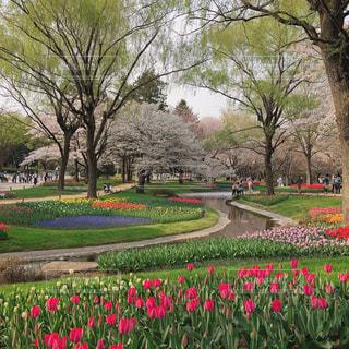 春の昭和記念公園の写真・画像素材[1122017]