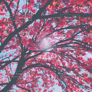 春の陽射しを遮る花の写真・画像素材[1124382]