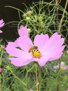 自然,公園,夏,屋外,太陽,田舎,樹木,新緑,可愛い,思い出,日陰,くもり,草木,日中,蜜蜂