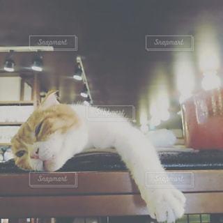 テーブルの上に横になっている猫の写真・画像素材[1221523]