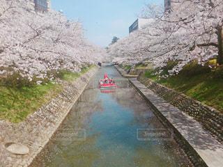 春,桜,赤,晴れ,青,川,桜並木,お花見,思い出,遊覧船,富山,松川