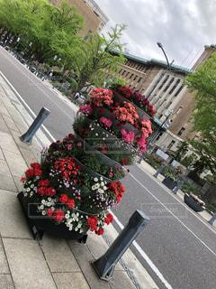 花,春,ピンク,赤,カラフル,鮮やか,満開,横浜,華やか,県庁,キング,日本大通り,GARDEN NECHLACE