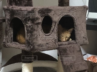 猫の写真・画像素材[1282130]