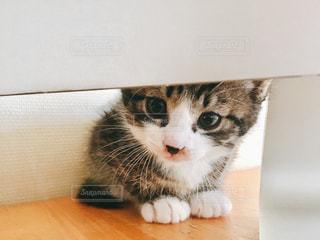 iMacからのぞく子猫の写真・画像素材[1255461]