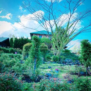 青と緑の茂みの写真・画像素材[1166034]
