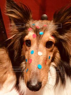 水玉犬の写真・画像素材[1111118]