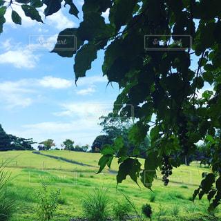 初夏の風景の写真・画像素材[1096299]